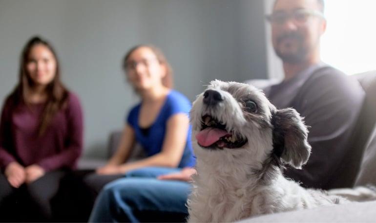 Pet-Ownership-Blog-Image-1-01