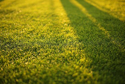 blur-bokeh-close-up-depth-of-field-572007