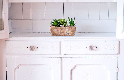 green-snake-plants-on-brown-pot-2239672-1